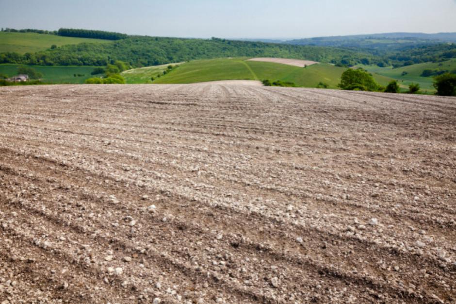 IERiGŻ: Brak opadów wzbudza niepokój o plony w rolnictwie