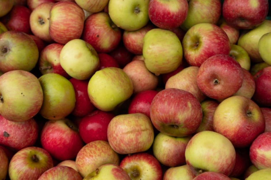 Sadownicy rozpoczną sezon 2019/20 nawet z ponad 100 tys. t zapasów jabłek