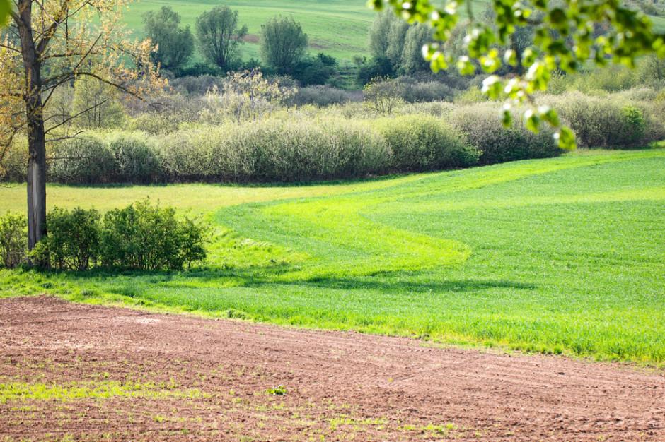 Izby rolnicze: Kwietniowa susza zmniejszy plony m.in. zbóż jarych