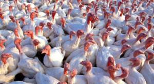 NIK o walce z grypą ptaków: Nieprawidłowości usprawiedliwione skalą zagrożenia