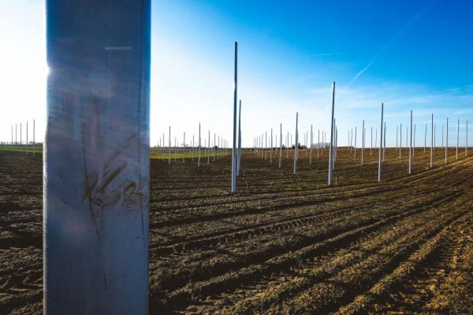 Bioremediacja jednym ze sposobów na dostosowanie do regulacji UE dla polskich producentów chmielu