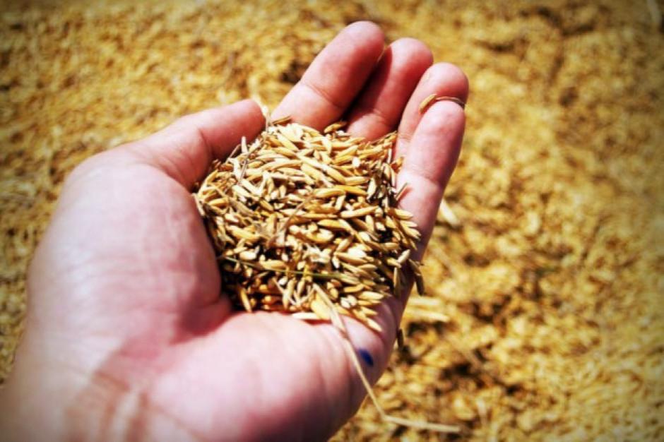 Wzrost prognozy światowej produkcji zbóż w 2019 r.
