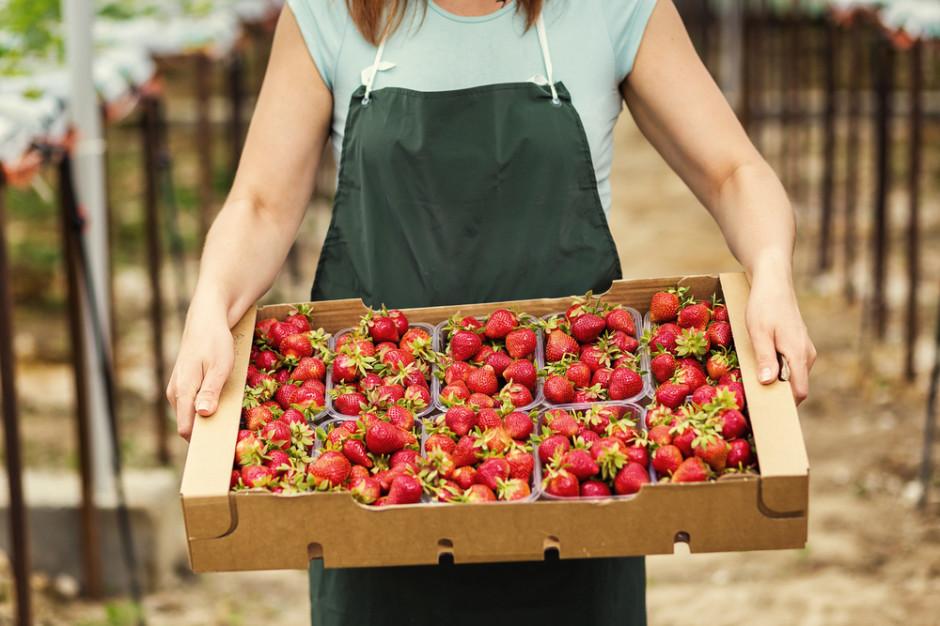 Carrefour: Chcemy, aby rolnicy sprzedawali część żywności bezpośrednio do naszych sklepów
