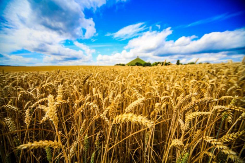 Zbiory zbóż w '19 wzrosną rdr o ok. 16 proc. do 31 mln ton