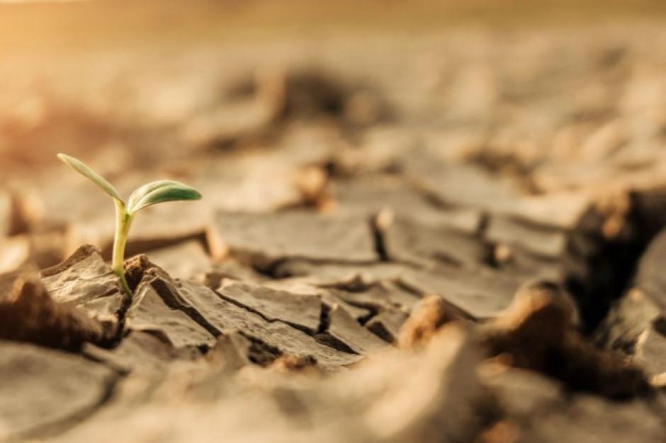 Bakterie wsparciem dla roślin w czasie suszy