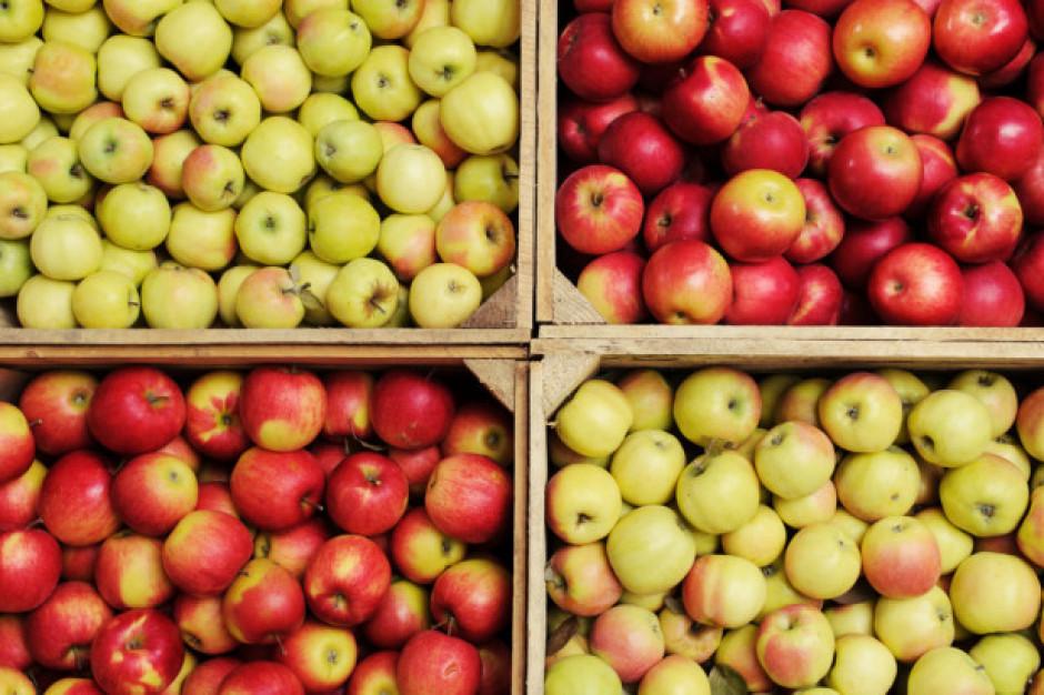 Analiza IERiGŻ: Ceny jabłek na rynkach hurtowych w maju stanowczo niższe niż przed rokiem