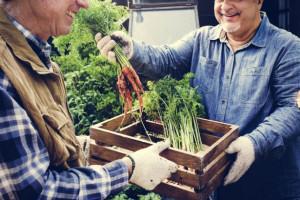 Niemcy: Rozwój rolnictwa ekologicznego kwitnie