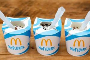 McDonald's rezygnuje z plastikowych wieczek na lody McFlurry