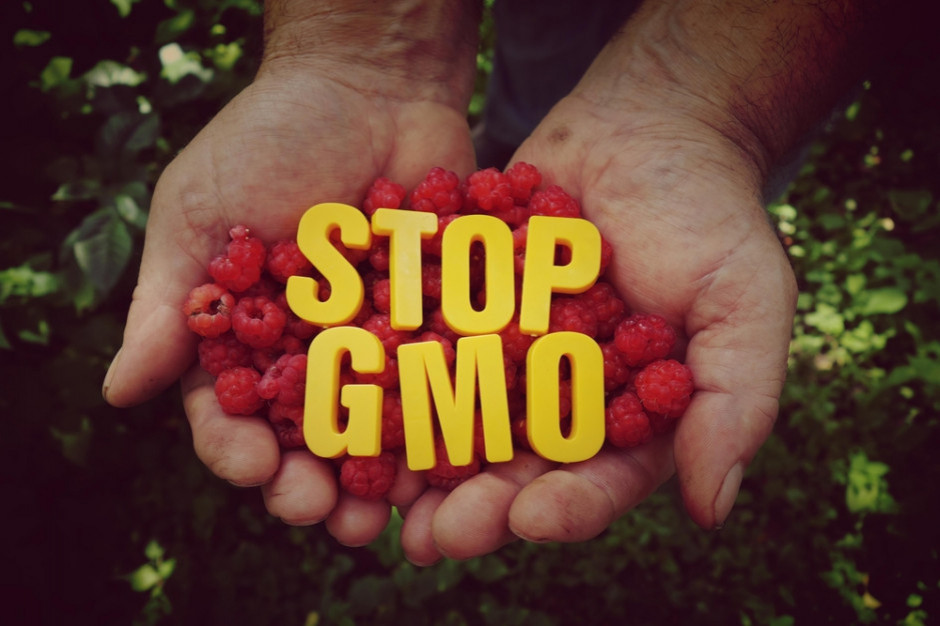 Bez poprawek do ustawy wprowadzającej oznakowanie produktów bez GMO