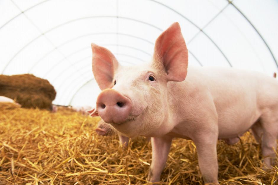 Mazowieckie: ASF w gospodarstwie w gminie Maciejowice