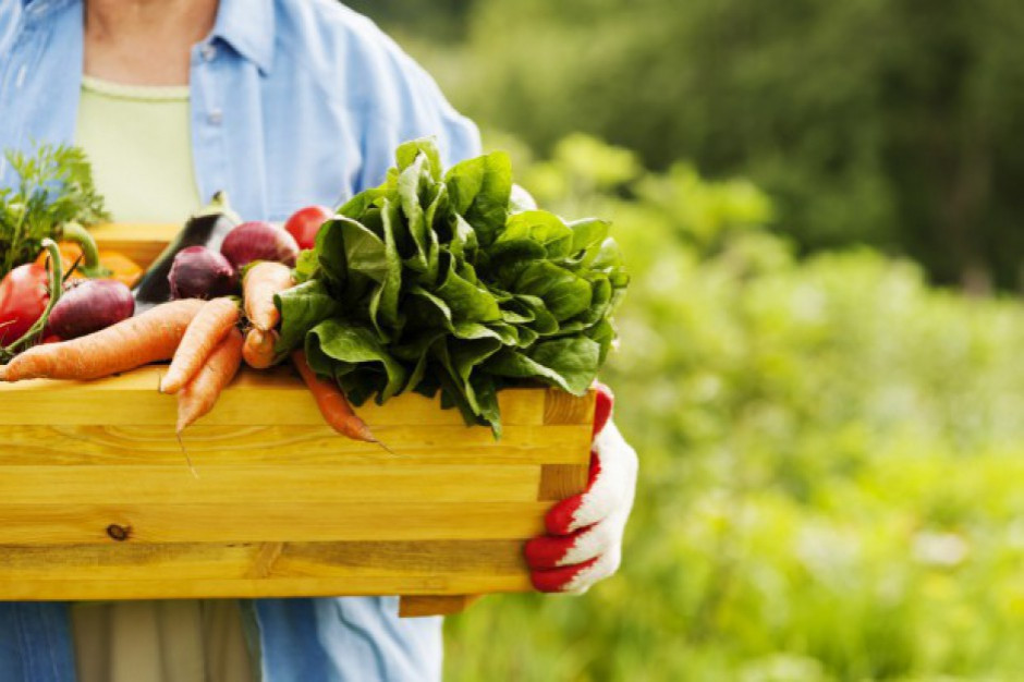 Liczba producentów rolnych wytwarzających ekożywność maleje