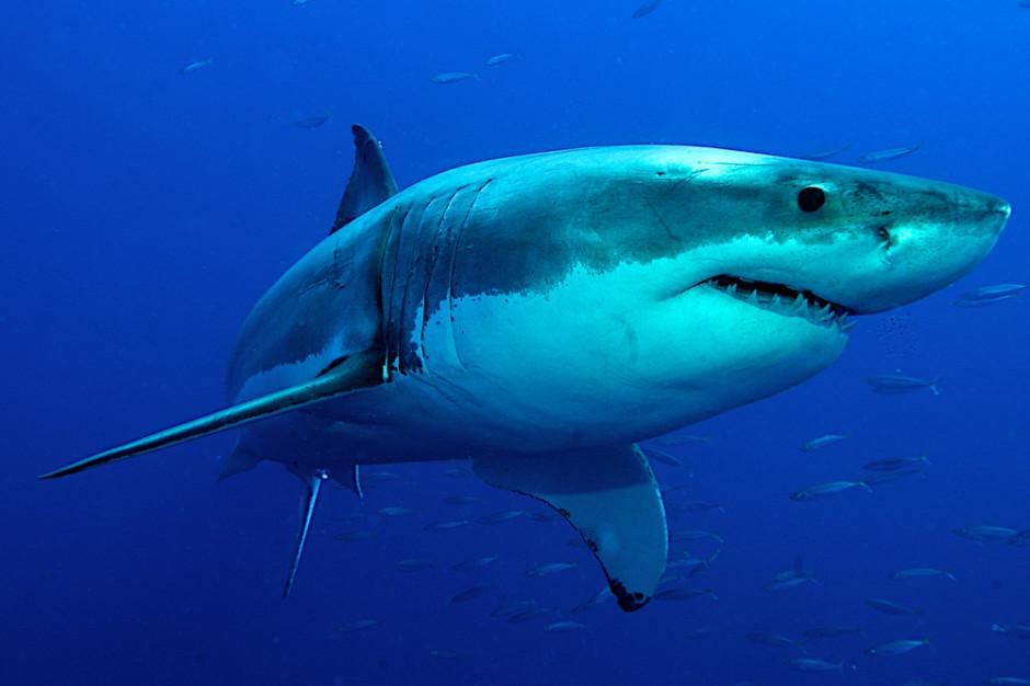 USA: Proces mężczyzny handlującego rekinami