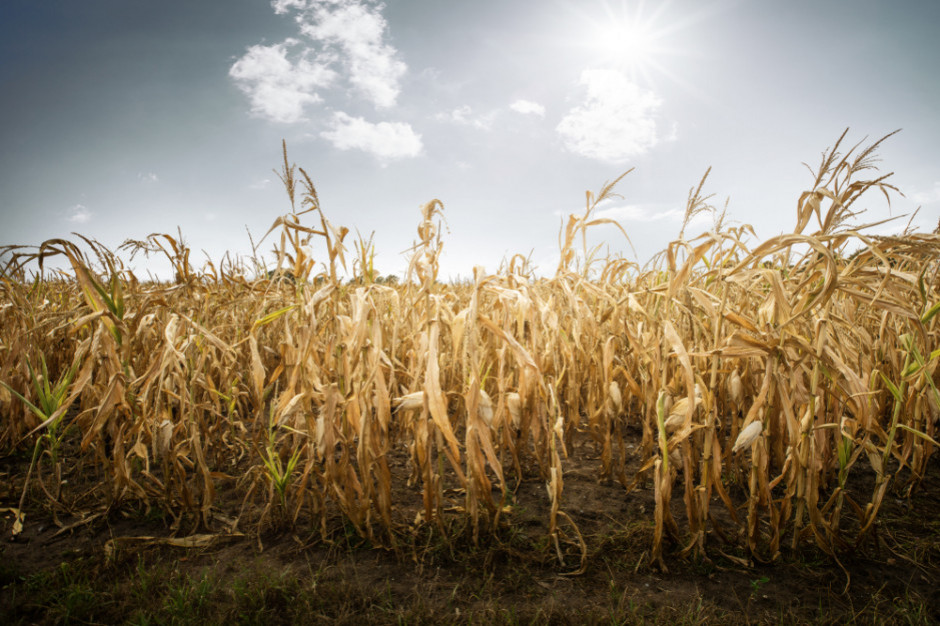 IUNG: Na terenie Polski utrzymuje się susza rolnicza