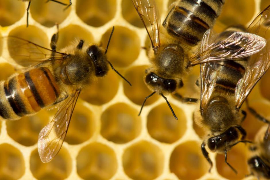 Małopolskie: Trwa zbiórka na odbudowę pasieki, w której wytruto pszczoły
