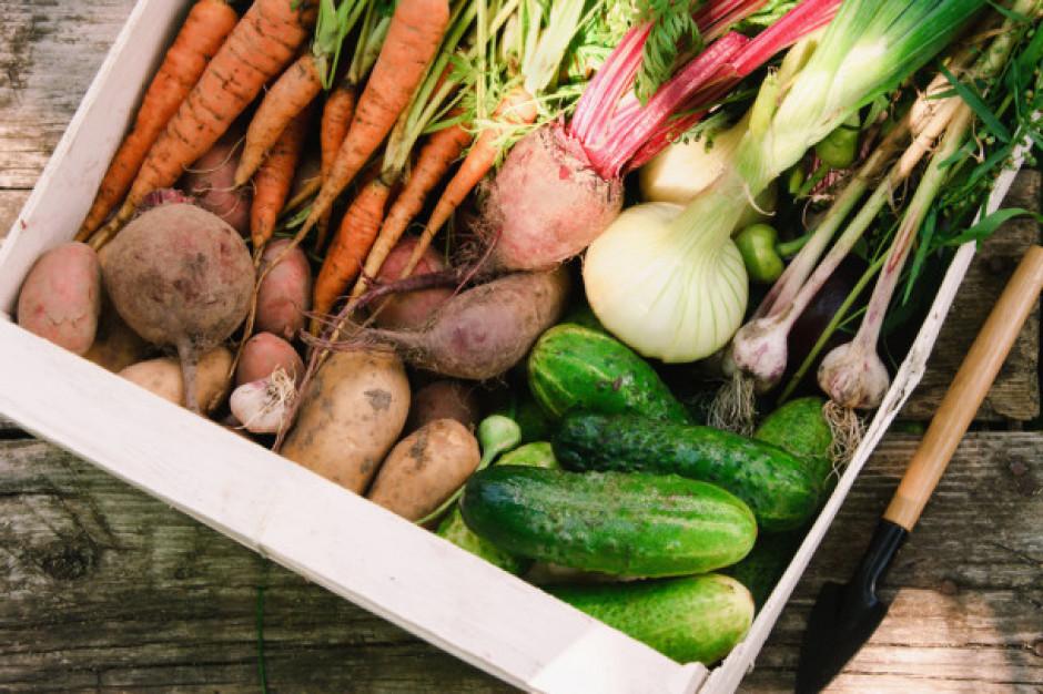 Bronisze: wysokie ceny warzyw. Niewielkie spadki cen marchwi, cebuli, buraków