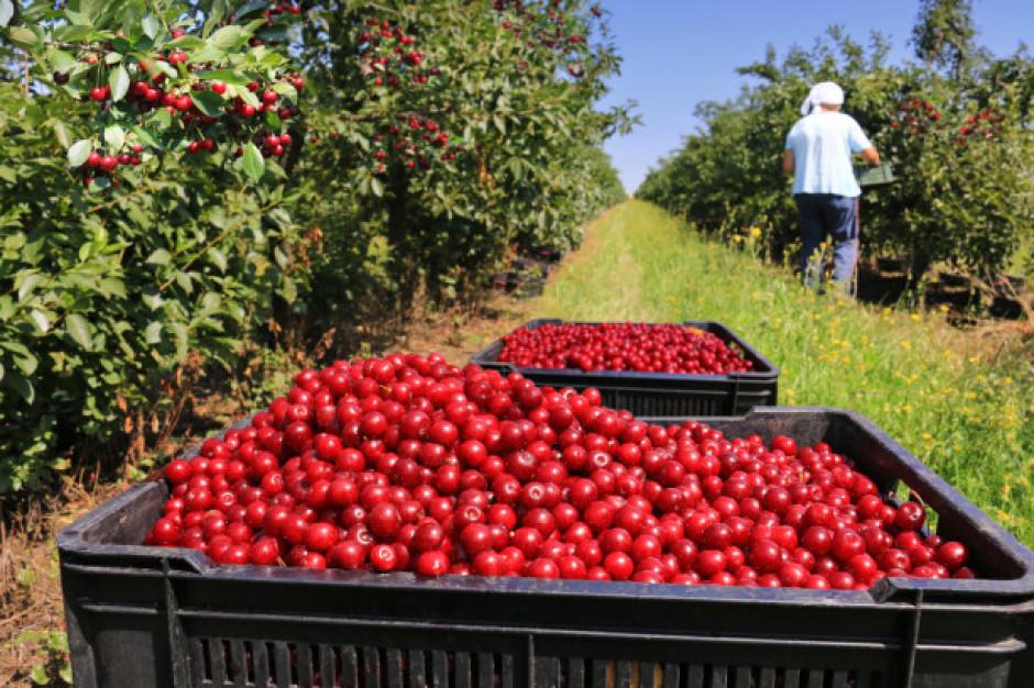UOKiK zapowiada decyzję chroniącą producentów owoców