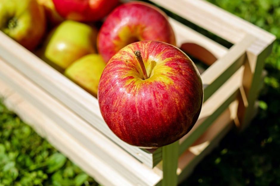 Rosja zniosła embargo na jabłka z Białorusi
