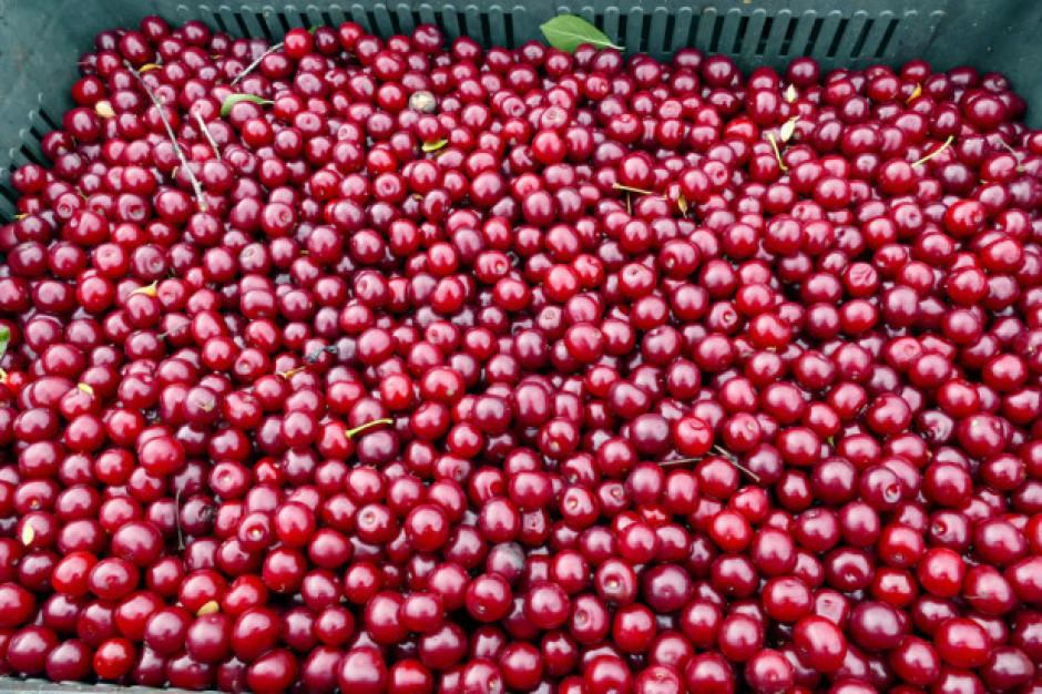 Ceny wiśni rosą jak na drożdżach