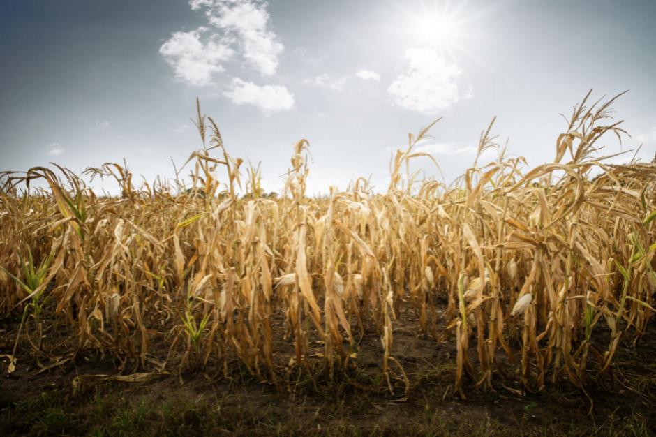 MRiRW o suszy: Poszkodowani rolnicy na pewno nie zostaną bez pomocy
