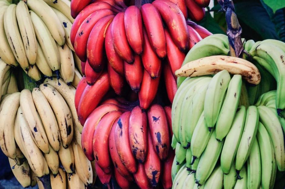 Port Gdańsk będzie przeładowywał bezpośrednio banany z Ameryki Środkowej
