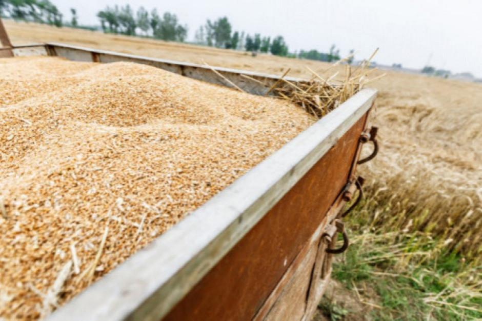 GUS: Wyższe zbiory zbóż, znaczny spadek zbiorów owoców