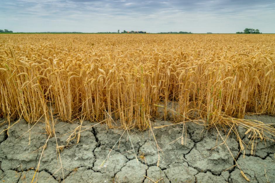 Ardanowski: Suszą zagrożonych jest 1,5 mln ha upraw