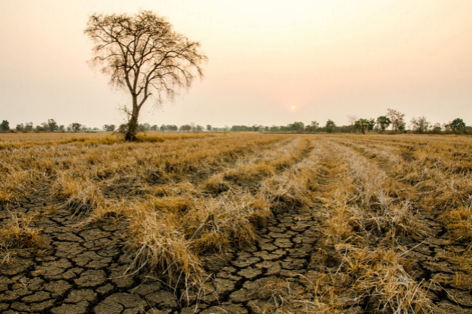 IUNG: susza w całym kraju, obejmuje wszystkie monitorowane uprawy