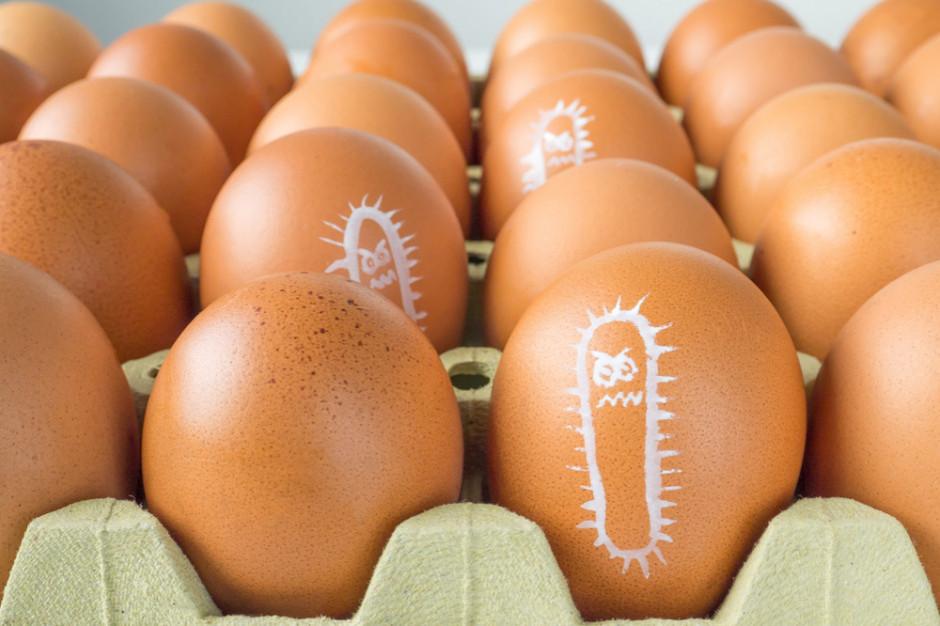 Pałeczki Salmonelli na jajach z Tesco