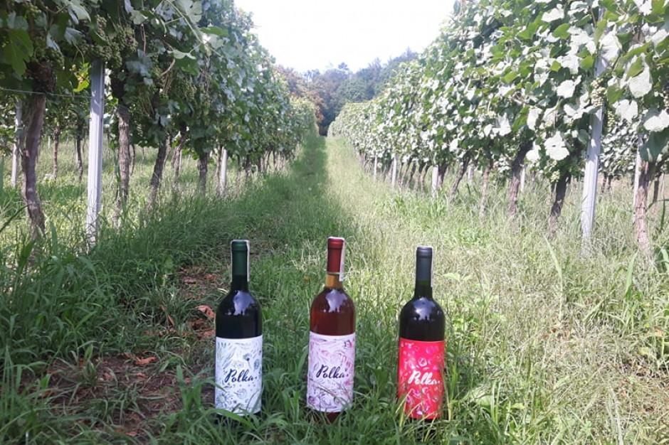 Lidl po raz czwarty sprzedaje wino z polskich winnic