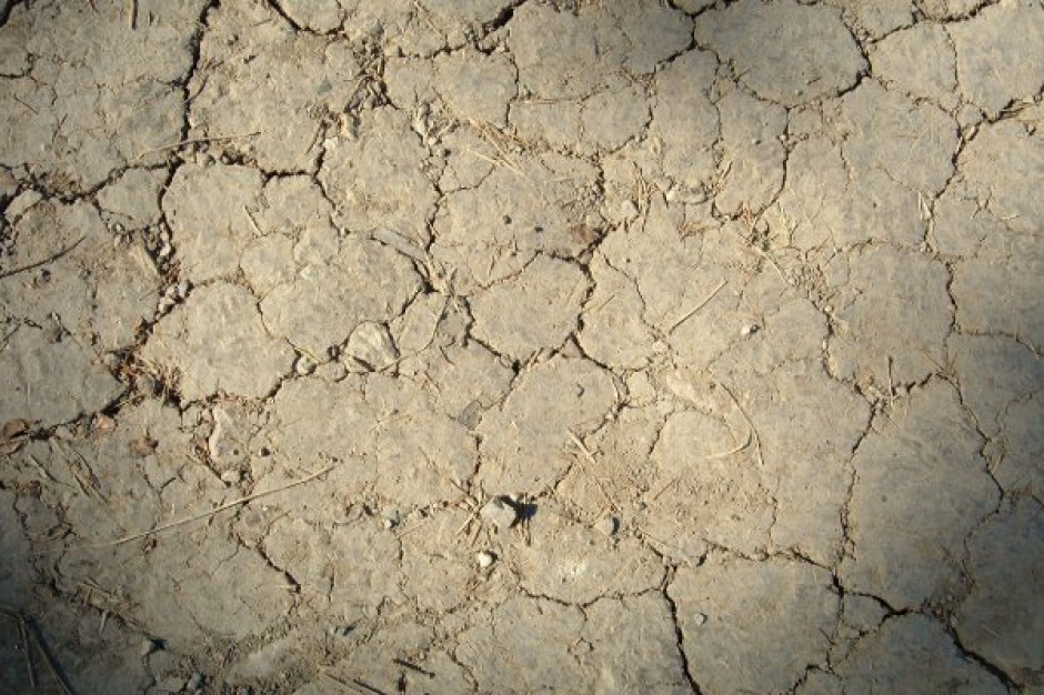 MRiRW: straty suszowe szacowane w coraz większej liczbie gmin