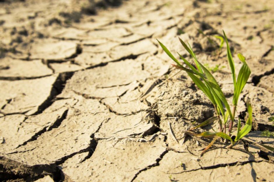 Rolnictwo, produkcja żywności i wylesianie istotnymi bodźcami powodującymi zmiany klimatu