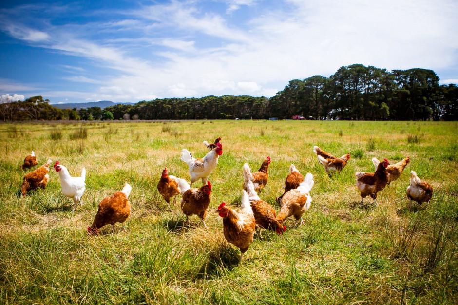 Carrefour: Nie sprzedajemy już jaj od kur z chowu klatkowego pod marką własną