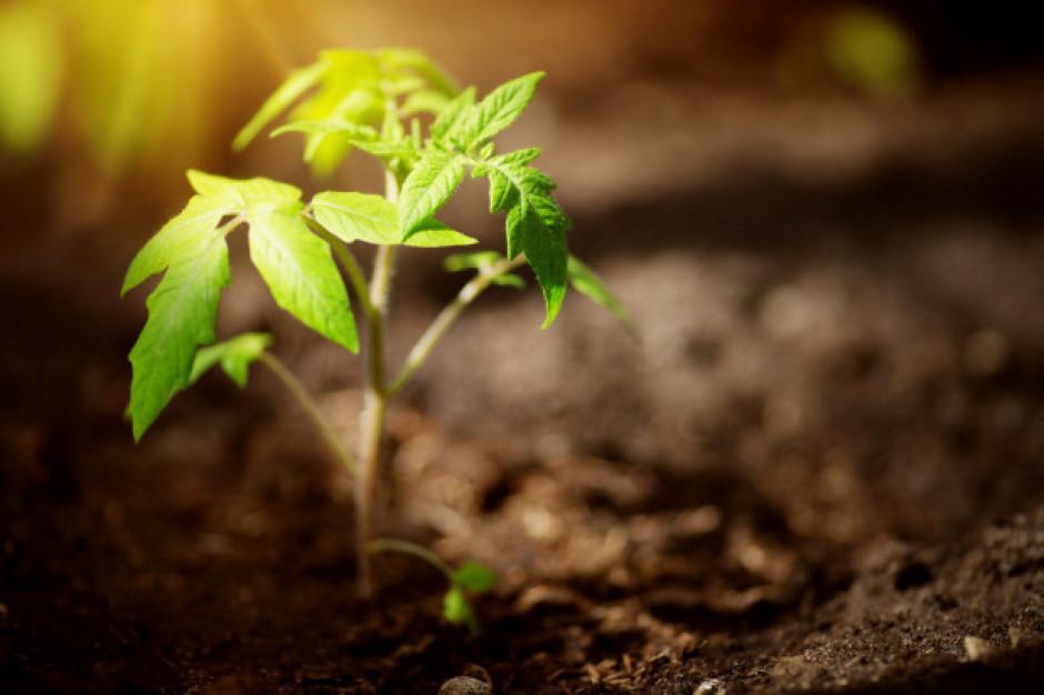 2020 r. będzie Międzynarodowym Rokiem Zdrowia Roślin