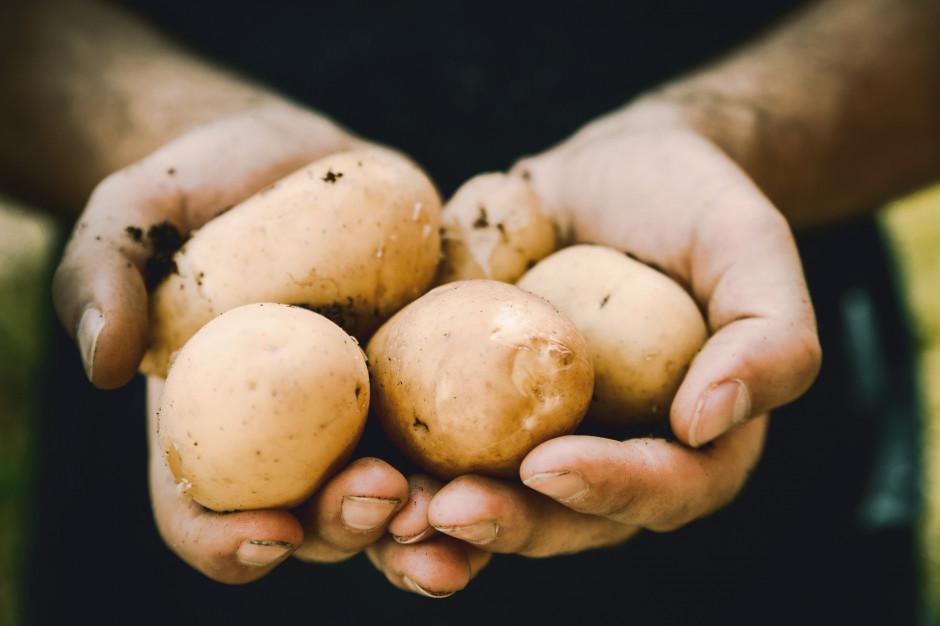 Ceny skupu podstawowych produktów rolnych w lipcu wzrosły o 3,9 proc. rdr