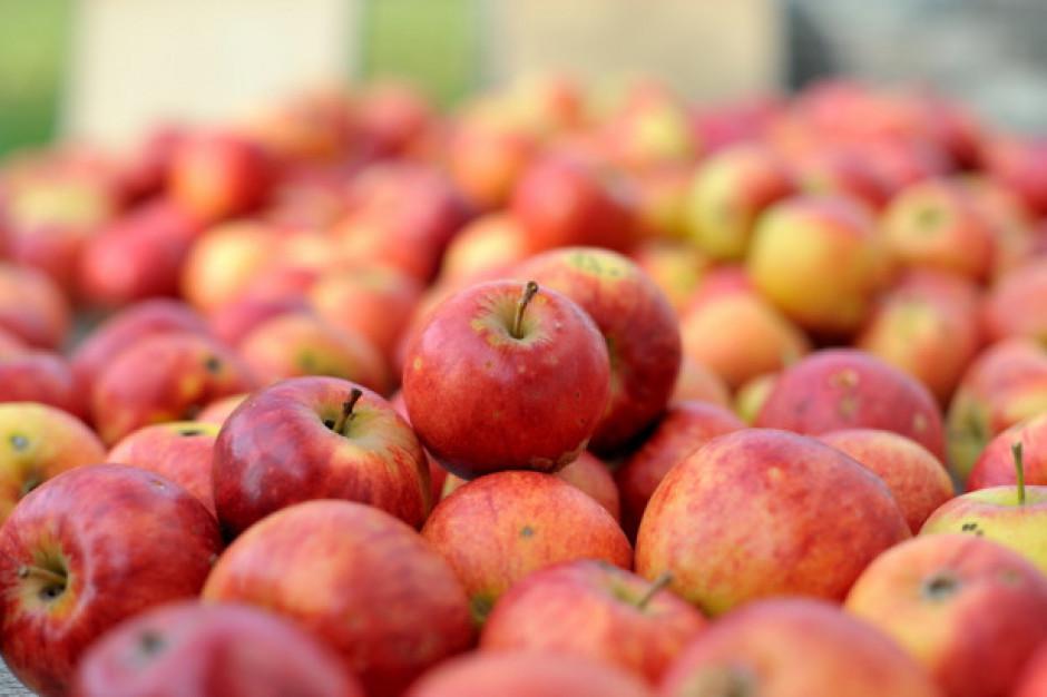 Ceny jabłek przemysłowych nadal rosną