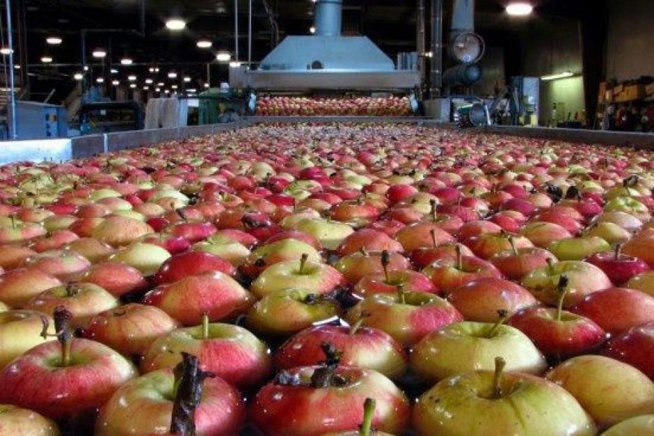 Unia Owocowa: Jabłka będą droższe, ale wzrosną też wymagania odbiorców hurtowych i konsumentów (wideo)