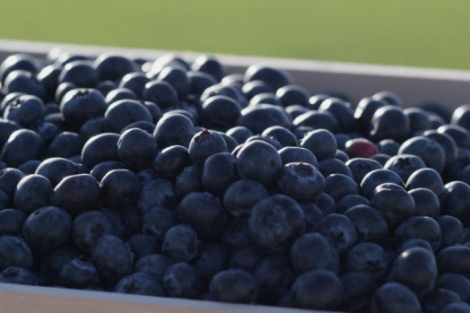 Producenci borówek: Promujmy jakość owoców (wideo)