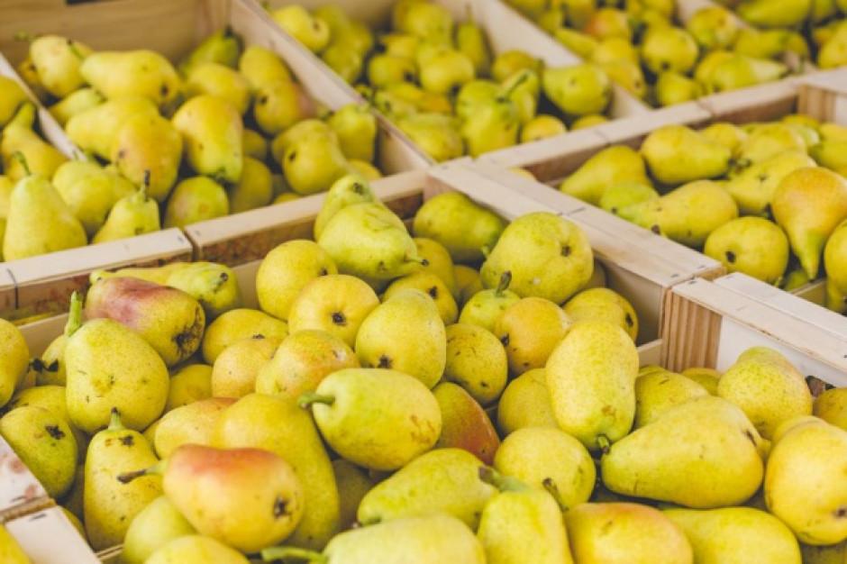 Mniejsze zbiory gruszek we Włoszech