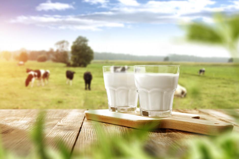 Raport Agro ING: skup mleka w UE po pierwszych 5. miesiącach minimalnie przekracza poziom w analogicznym okresie rdr