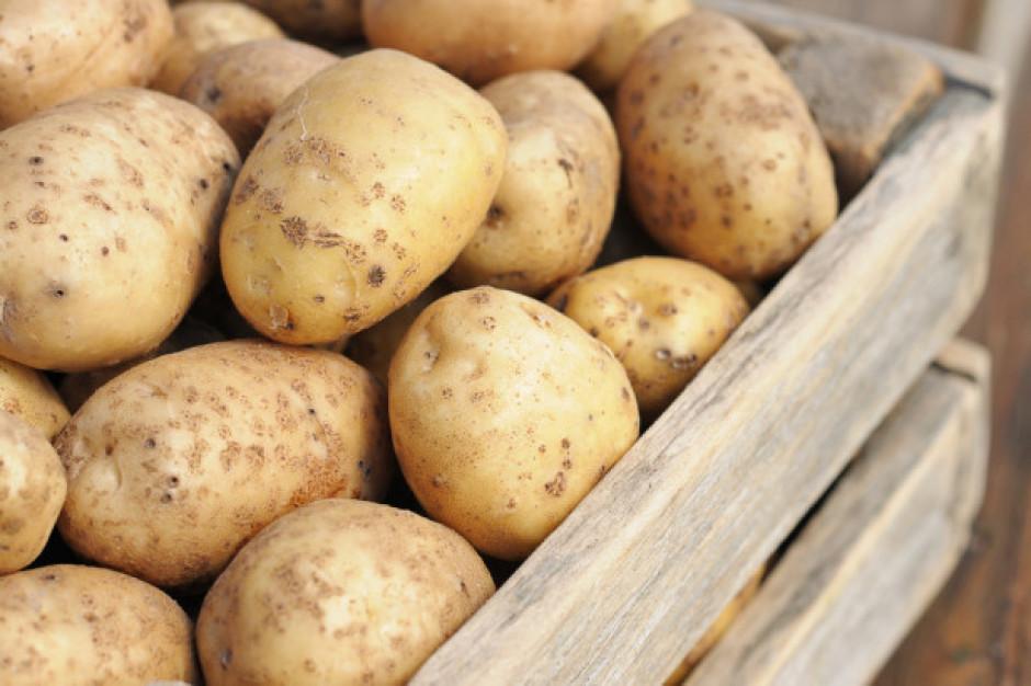 Bronisze: Podaż ziemniaków z importu wpłynęła obniżkę cen ziemniaków