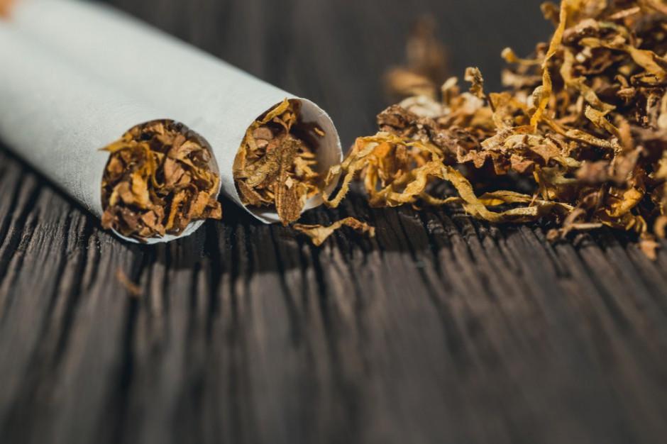 W Lubuskiem funkcjonariusze KAS przechwycili 1,5 tony suszu tytoniowego