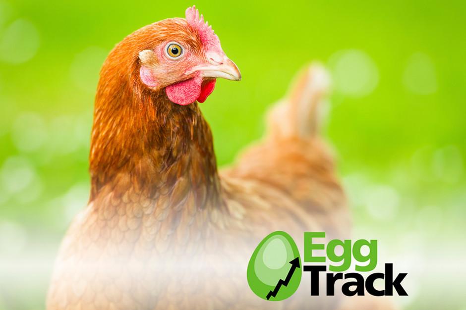 Jak firmy wycofują jaja z hodowli klatkowej? (raport)