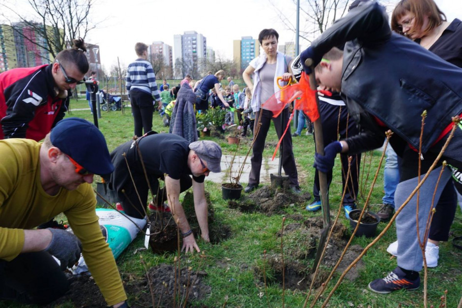 Aldi razem z Klubem Gaja zasadzą 2800 drzew