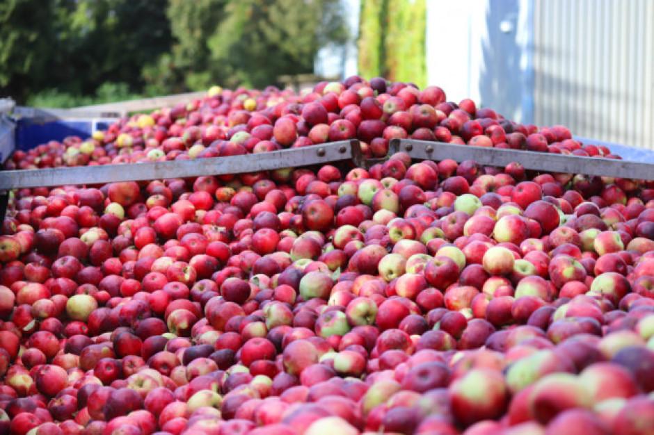 Analiza: Rosną ceny jabłek przemysłowych