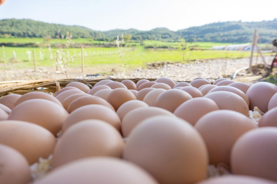 Mięso na wtorek: Popyt na jaja z chowów alternatywnych został przeszacowany?