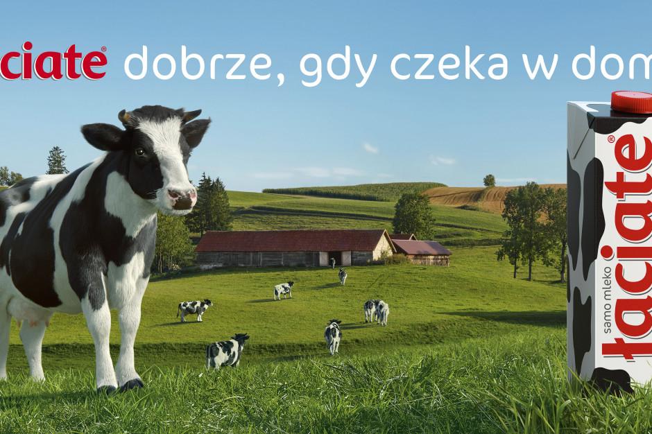 Nowa kampania Mlekpolu i mleka Łaciatego