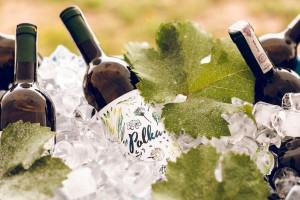 Zdjęcie numer 2 - galeria: Casualowy piątek: Winnica Srebrna Góra - chcemy produkować coraz lepsze wina (zdjęcia)