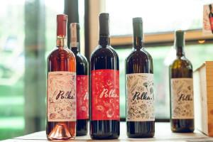 Zdjęcie numer 9 - galeria: Casualowy piątek: Winnica Srebrna Góra - chcemy produkować coraz lepsze wina (zdjęcia)
