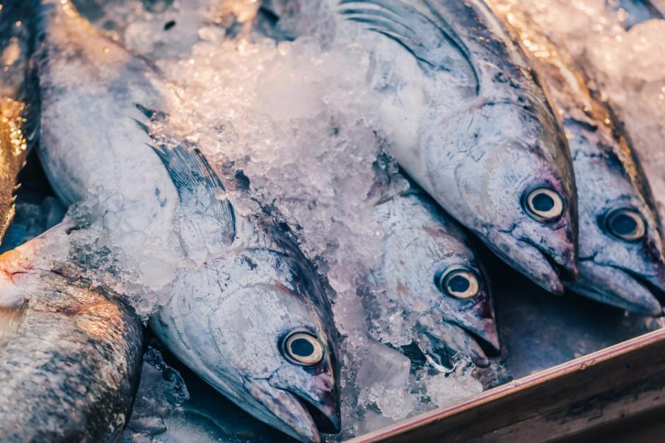 MSC: Rośnie popyt na ryby ze zrównoważonych połowów