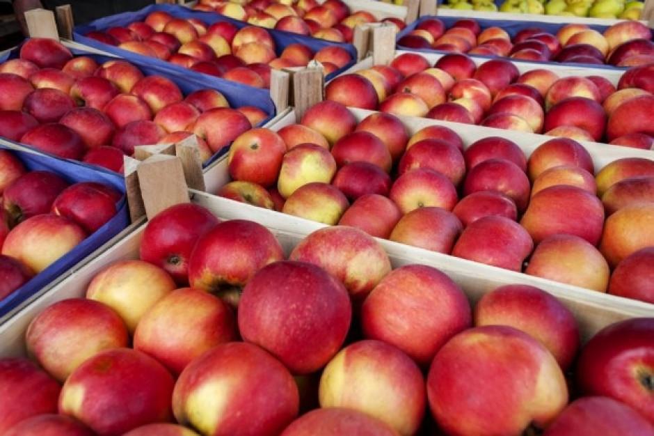 Tymbark myśli o przetwarzaniu pozostałości z jabłek na biogaz